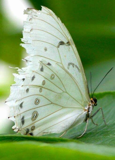 Animal Imagery In the Pearl Unique Pin by Janice On Nature S Beauty Pinterest
