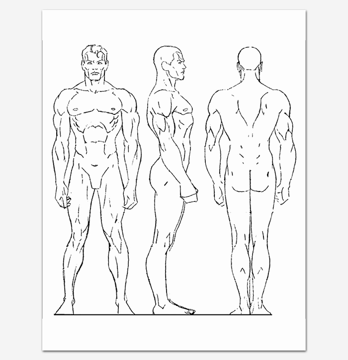 Blank Male Body Template Beautiful Human Body Outline Template 32 Printable Worksheets