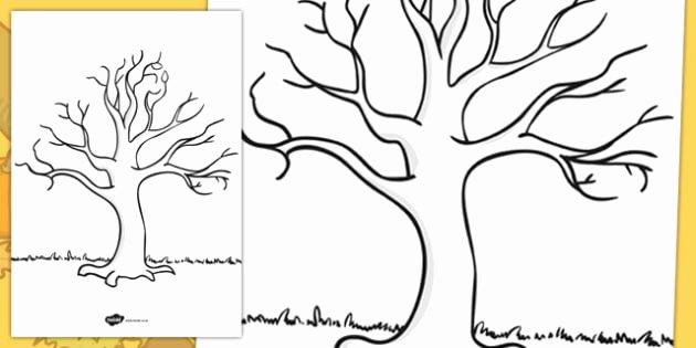 Bulletin Board Tree Template Beautiful Free Tree Template Ks1 Nature Drawing Resources