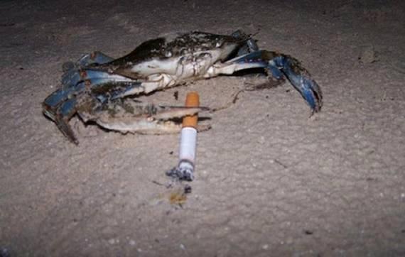 "Crab Rave Template New ""crab"" Meme Templates Imgflip"