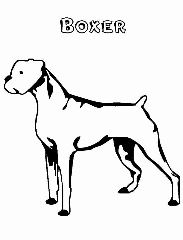 boxer dog face sketch templates