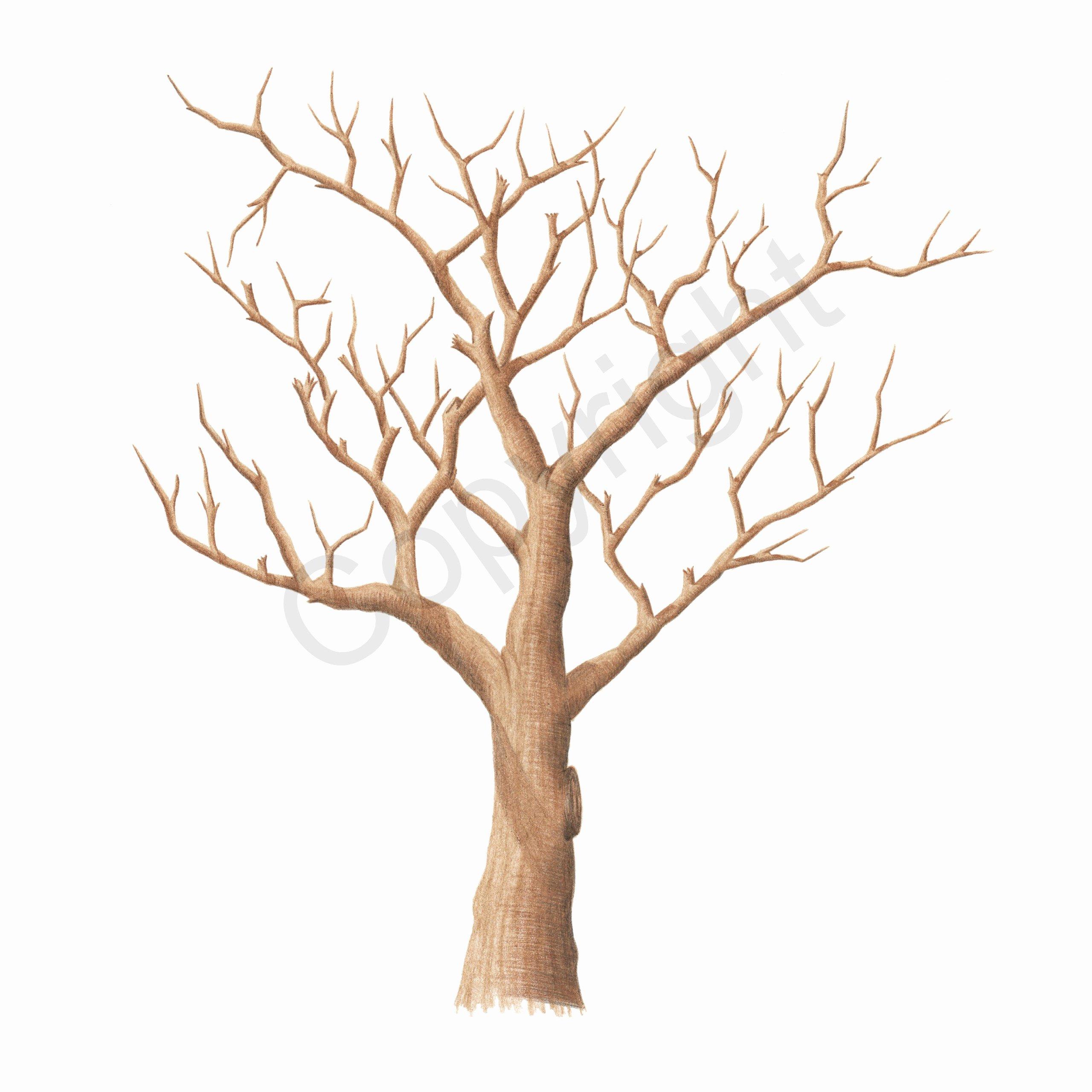 Fingerprint Trees Templates Lovely 9 Best Of Printable Fingerprint Tree Baby Shower