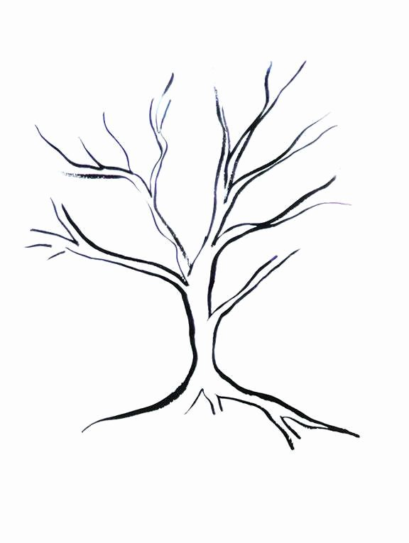 How to Draw A Simple Tree without Leaves Inspirational Disegni Degli Alberi Da Stampare Foto 15 42