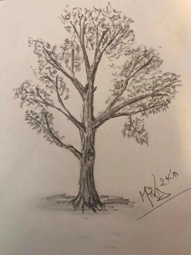 How to Draw A Simple Tree without Leaves Lovely How to Draw A Detailed Tree 7 Steps with Wikihow