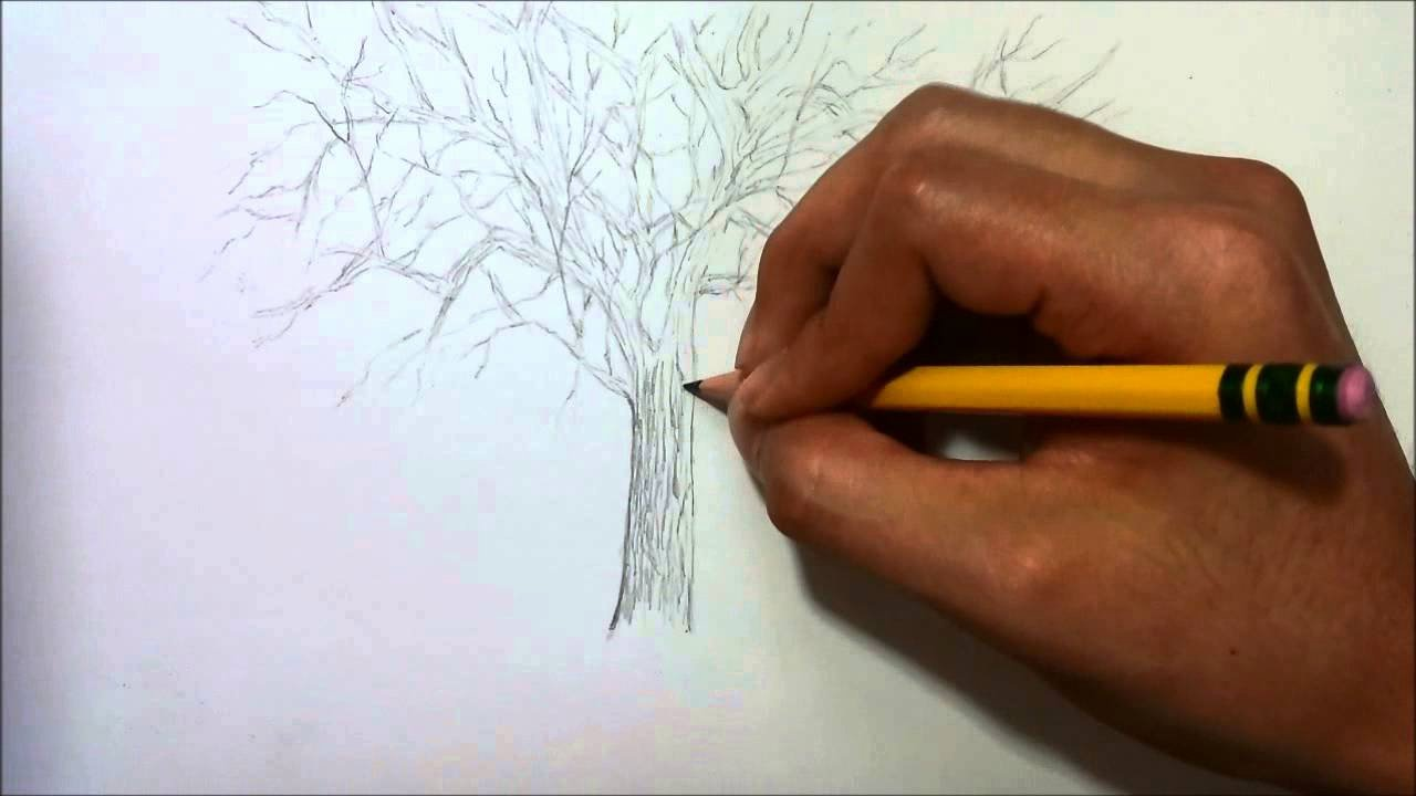How to Draw A Simple Tree without Leaves Luxury Simple Drawing Tree without Leaves