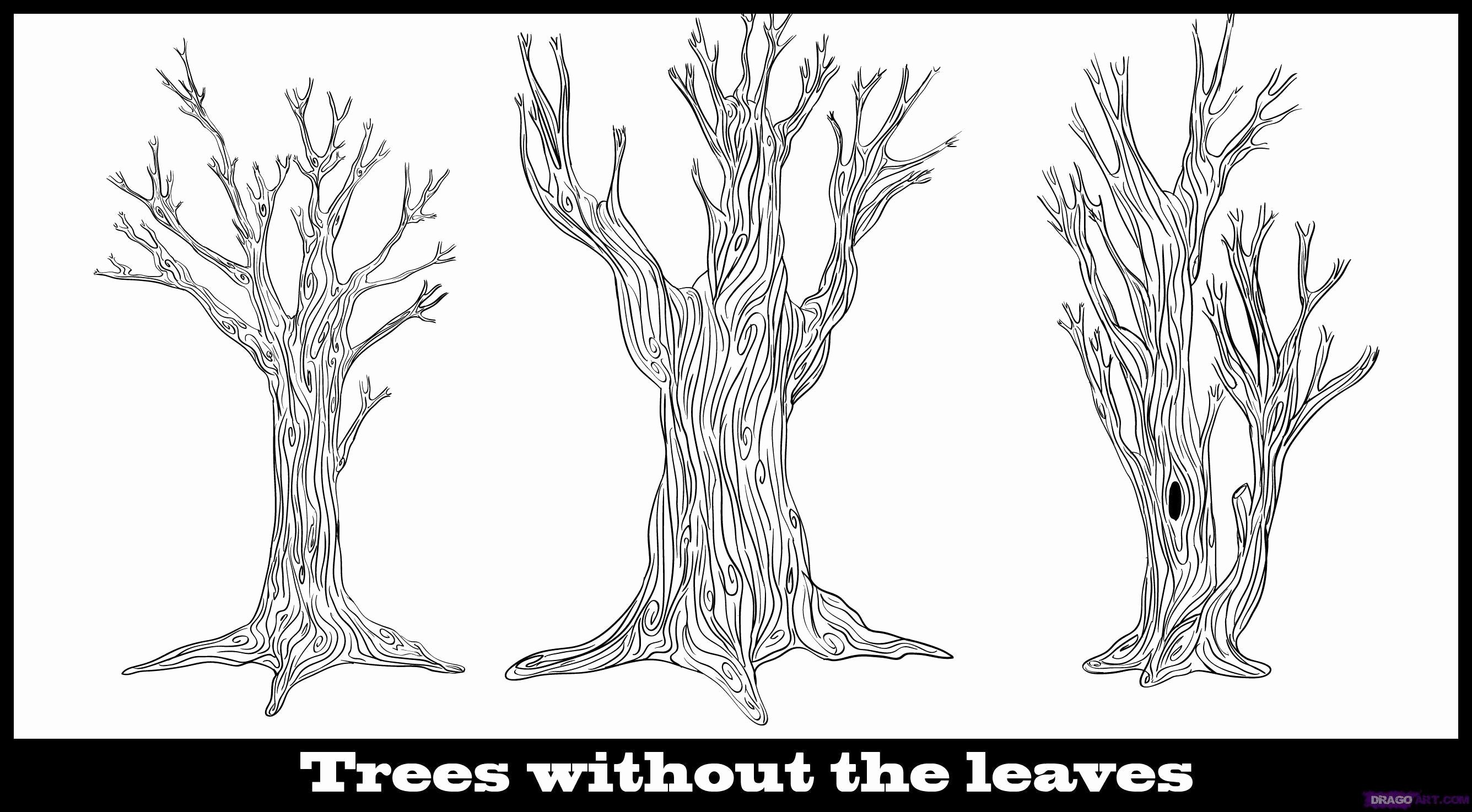 How to Draw A Simple Tree without Leaves Unique How to Draw A Tree without Leaves Step by Step
