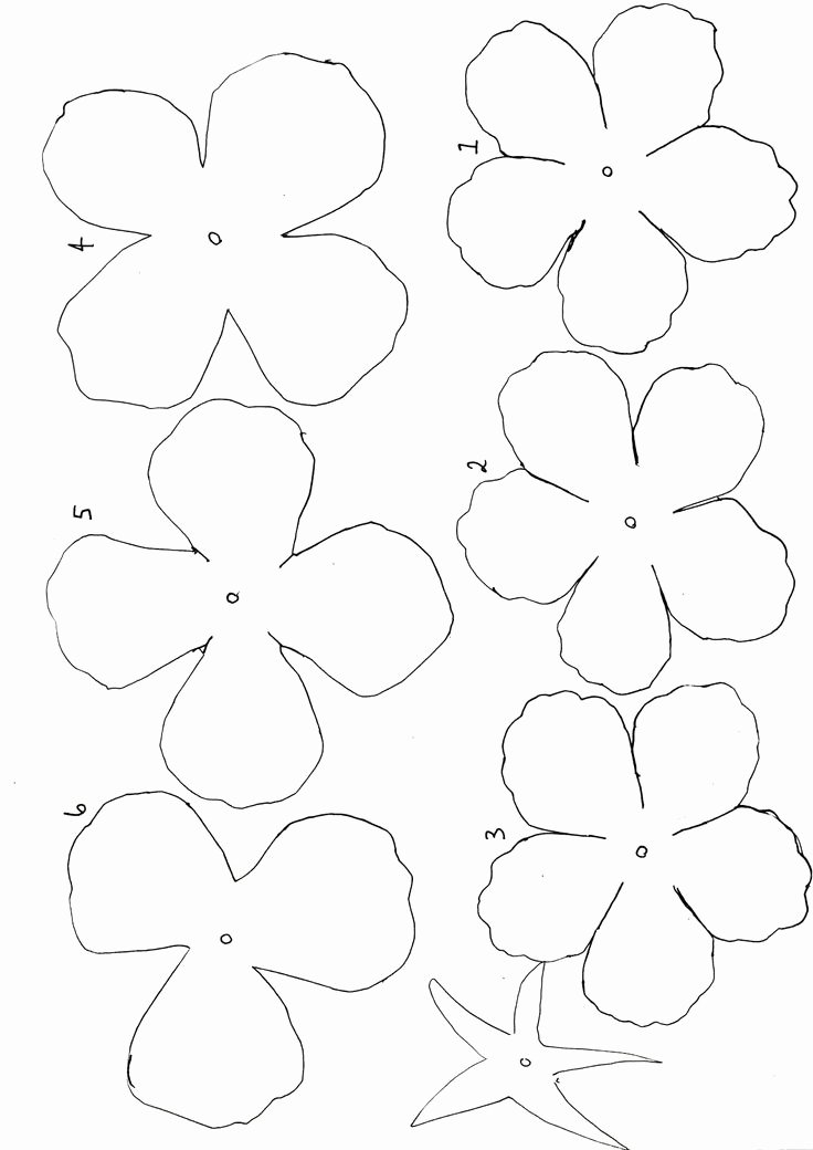 Paper Flower Template Martha Stewart Awesome 43 Best Templates Images On Pinterest