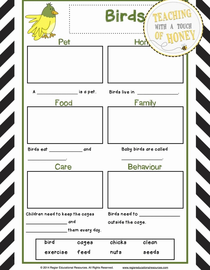Pet Report Card Template Luxury 212 Best Pet Reports Images On Pinterest