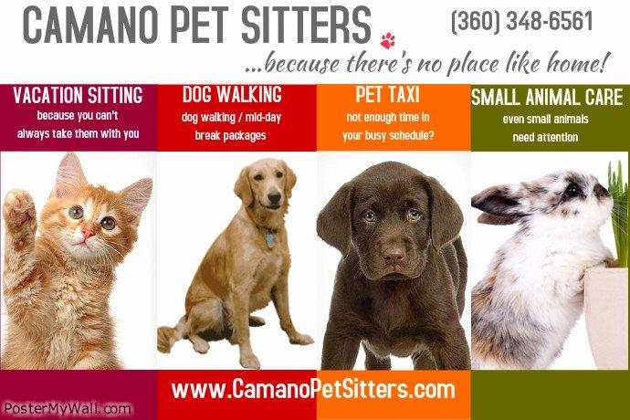 Pet Sitting Flyer Template Unique Pet Sitter Poster Template