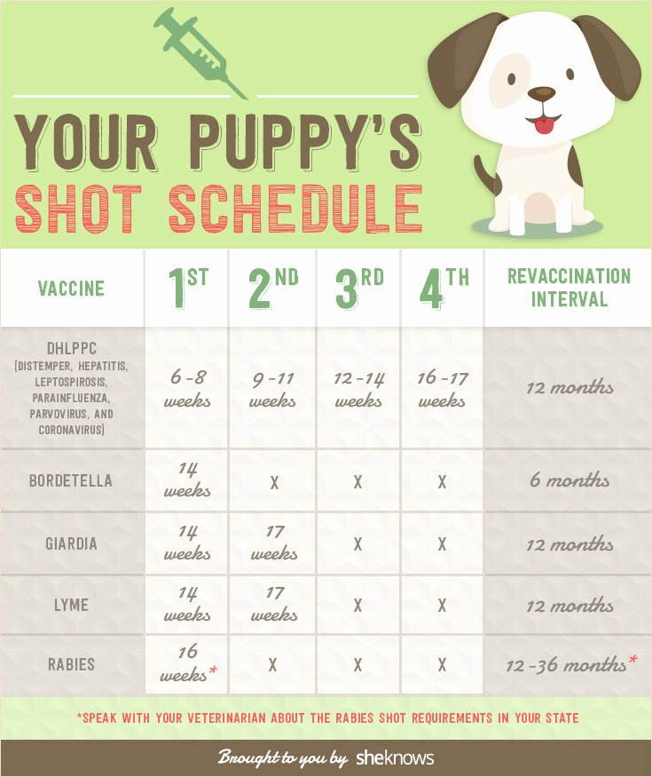 Printable Puppy Shot Records Inspirational Keep Your Puppy Healthy with This Vaccination Schedule