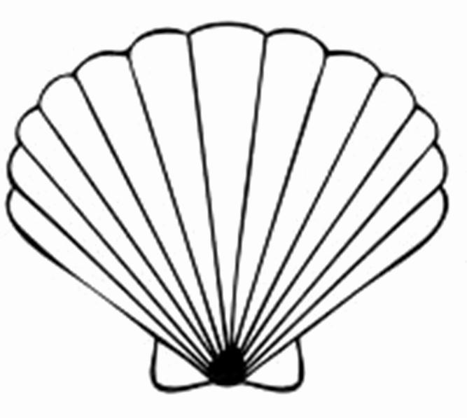 Seashell Template Printable Luxury Seashell Template Clipart Best